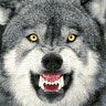 Loan Wolf